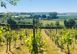 WijnToer Zuid-Limburg