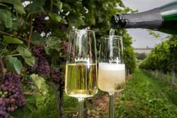 Overnachten op Wijngaard Zuid-Limburg