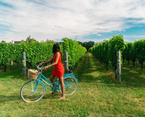 Zeeuwse Wijn - Fietsroute langs Wijngaard